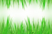 Abstract beautiful fresh grass and light reflect in morning — Stock Photo