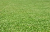 Fresh grass for background — Stock Photo