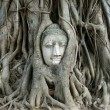 The head of Buddha in tree roots — Stock Photo #55899779
