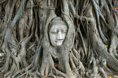 The head of Buddha in tree roots — Stock Photo