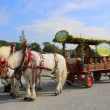 Festive horse cart with wine barrels — Stock Photo #56131611