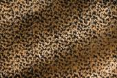 Art abstract leopard leather background — Stock Photo