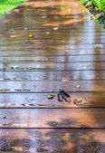 Wooden walkway — Stock Photo