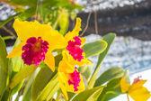 Flowers on garden. — Stock Photo