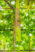 The rotten zucchini — Stock Photo