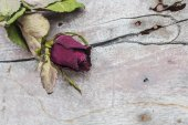 Dried roses and old wooden — Stockfoto