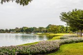Flowers on the lake — Zdjęcie stockowe