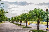 Walkways and trees  — Stock Photo