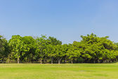 Lawn and blue sky — Stock Photo
