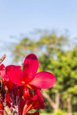Beautiful red flowers — Stock Photo