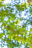 Blur from nature of the tree. — Stock Photo