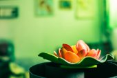 Lilies on a green background. — ストック写真