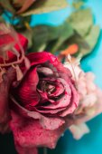 Red roses with a picture at close range. — Stock Photo
