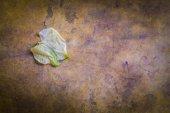 Bladen på trä. — Stockfoto