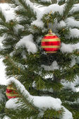 The New Year's decorated pine in snow — Stock Photo