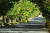 Approximating car in the trees tunnel — Stock Photo