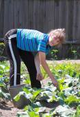 Woman molder earth in vegetable patch — Stock Photo