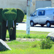 Funny bush in the form of elephant — Stock Photo #60109215