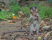 Baby macaque nearly Batu caves — Stock Photo