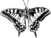 Butterfly graphic drawing — Vettoriale Stock