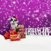 Tierische Weihnacht gato natal neve — Fotografia Stock