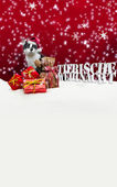 Tierische Weihnacht Cat Christmas Snow — Stock Photo