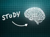 Study brain background knowledge science blackboard turquoise — Foto Stock