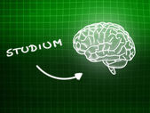 Studium brain background knowledge science blackboard green — Stockfoto