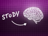 Study brain background knowledge science blackboard pink — Stockfoto
