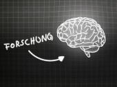 Forschung brain background knowledge science blackboard gray — Stock Photo