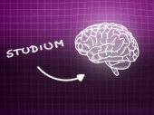 Studium brain background knowledge science blackboard pink — Stock Photo