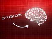 Studium brain background knowledge science blackboard red — Stock fotografie