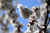 Ha llegado la primavera — Foto de Stock