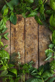 Food background with aromatic herbs. — Stock Photo