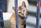 Tabby thai kitten.  outdoors — 图库照片