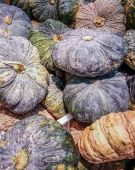 Pumpkins sale at local market — Stock Photo