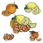 Vector icon set color citrus fruit  isolated on white background — Vecteur