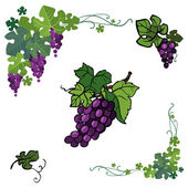 Vector icon set color grape  isolated on white background. — Stock Vector