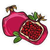Vector pomegranate — Stock Vector