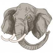 Vector illustration of engraving elephants head on white backgro — Stock Vector