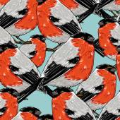 Bullfinch birds seamless pattern — Stock Vector