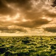 Sky and Moss — Stock Photo #56633697