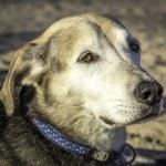 Dog on the Beach — Stock Photo #56634261
