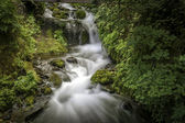 Pacific Northwest Waterfall — Stock Photo