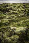 Rocks and Moss — Foto Stock