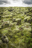 Rocks and Moss — Stock Photo