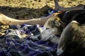 Nap on the Beach — Stockfoto