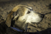 собака на пляже — Стоковое фото