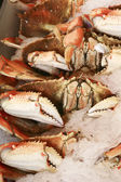 Row of crabs — Foto Stock