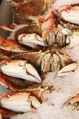 Row of crabs — Stockfoto